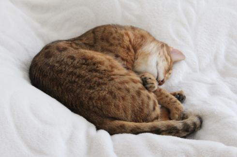 22-schlafender-kater
