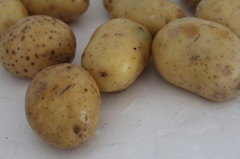 25 Kartoffeln