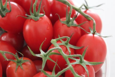 8-tomaten-hofer