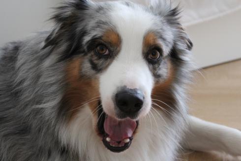 10-sprechender-hund