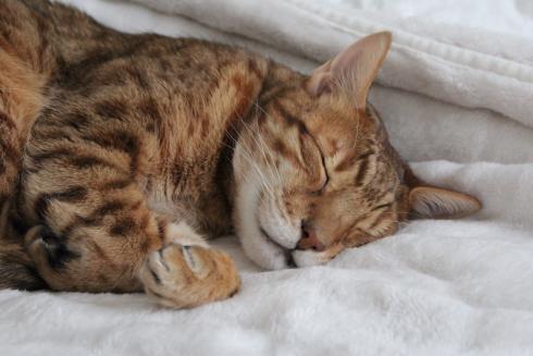 11-schlafende-katze