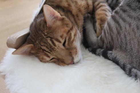 13-diego-und-smilla-katzenliebe