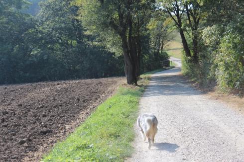 14-spazieren-mit-hund