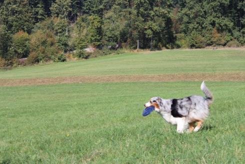 16-frisbee-hund