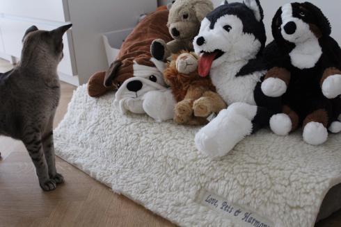 7-smilla-love-pets-and-harmony-meditationsmatte-kuschelmatte-fuer-katzen-hunde