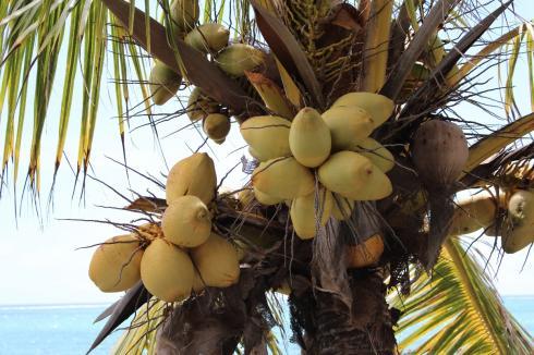 8-kokosnuesse