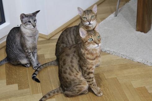 14 Drei Katzen Haushalt