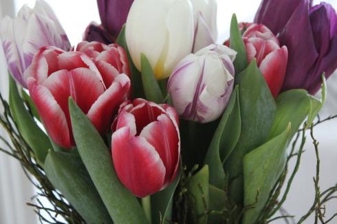 20 Frühlingsblumen