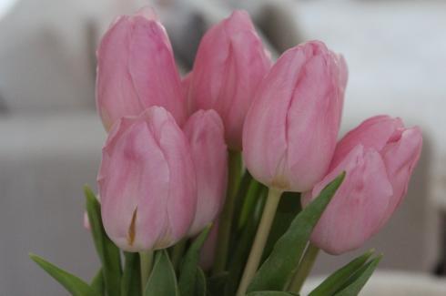 21-erste-tulpen