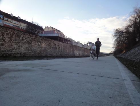 23 Laufen mit Hund in Wien Wien Fluss