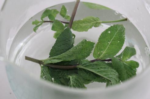 9 Tee mit frischer Minze