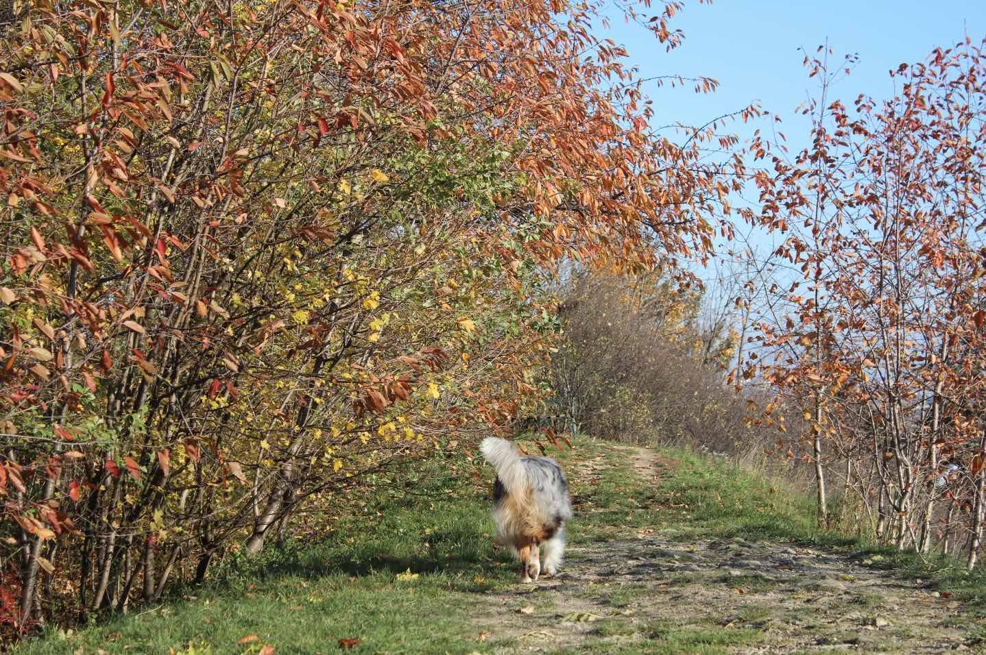 Spazieren mit Hund in Wien