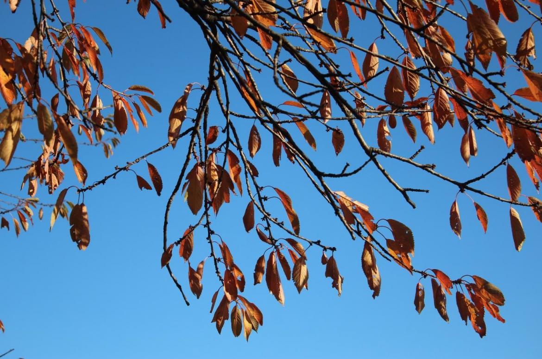 goldener Herbst Himmel Blätter Entspannung entspannen Gesundheit