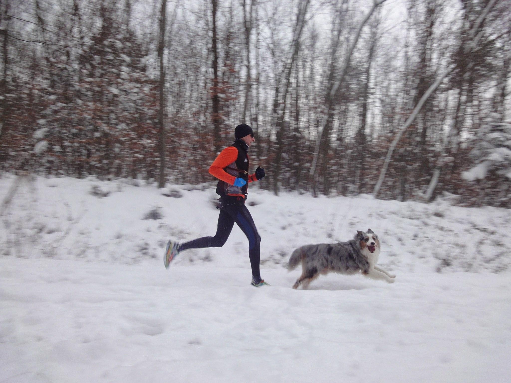 Run Dog Winter