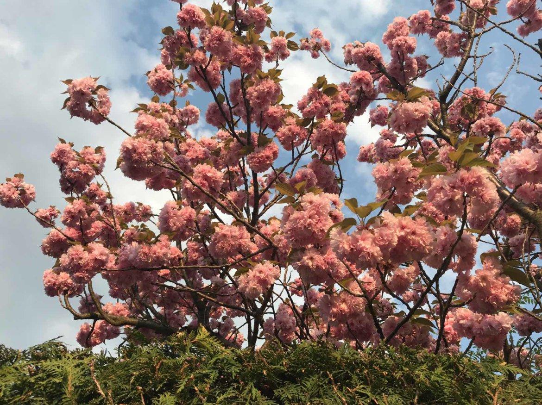 Blüten Frühling Wien Natur