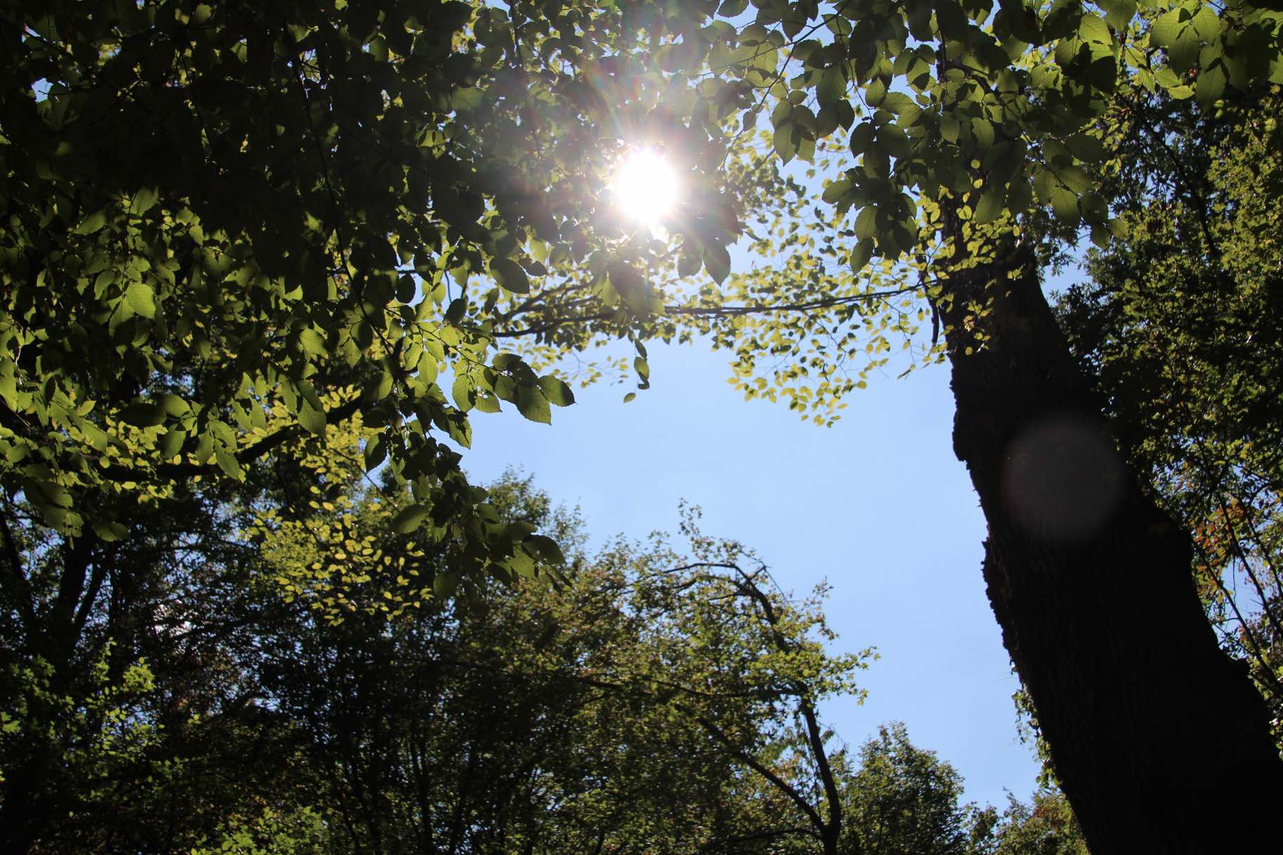 Immunsystem Mikronährstoffe Sonne Nahrungsergänzungsmittel