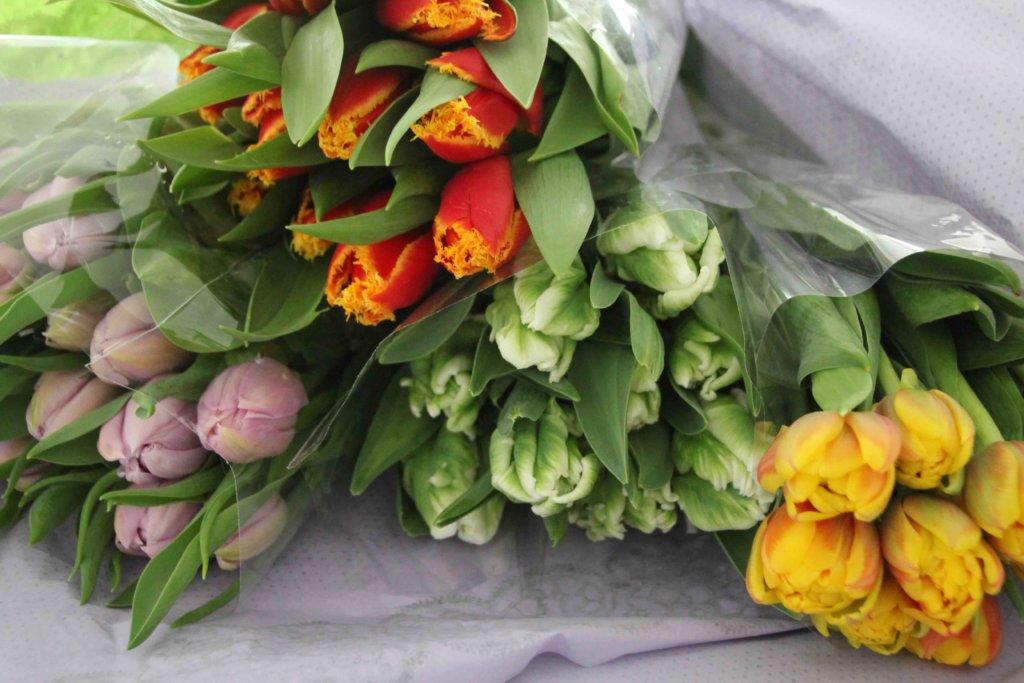 Frühlingsblumen Tulpenliebe