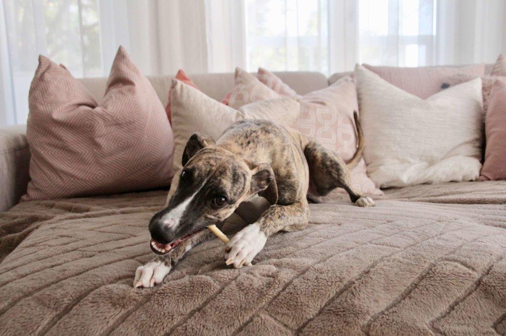 Knacken Hund Sofa