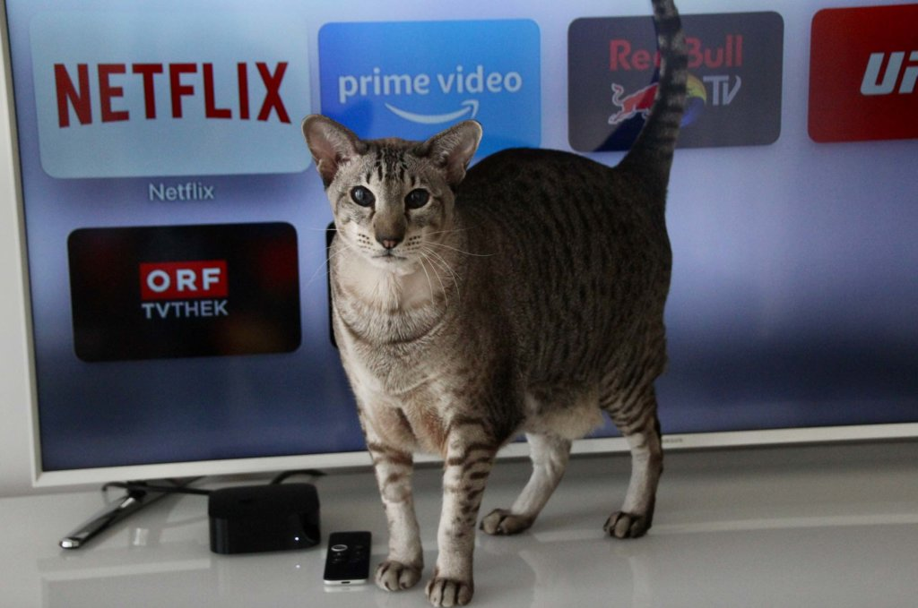 Katze Serien Schauen