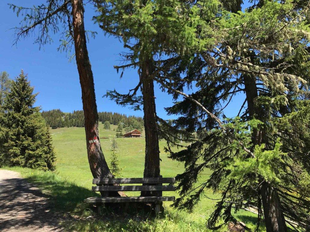 Natur Tirol Urlaub Sommerurlaub 2020