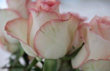 Anti-Aging-Behandlung Falten Wien TDA Erfahrungen