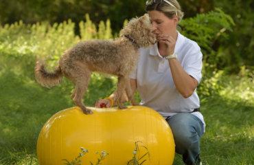 Mag. Karo Krieger Hundeschule Physiotherapie für Hunde