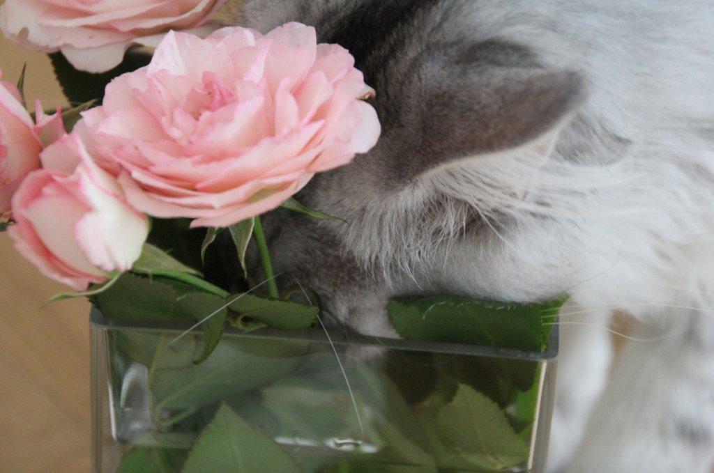 Katze trinkt aus Vase