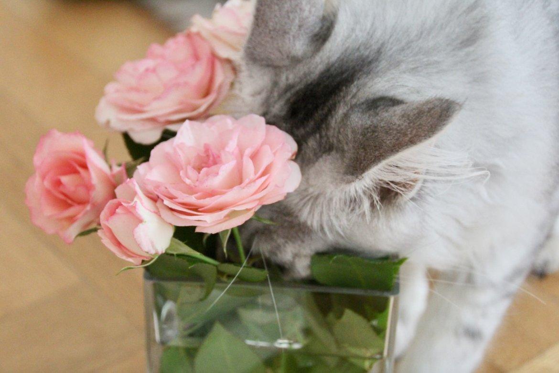 Katzenbilder Psyche Kraft Krise