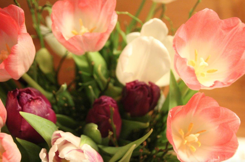 Blumen Tulpen 2021