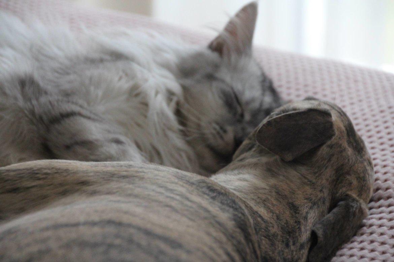 Katze und Hund zusammen unter einem Dach