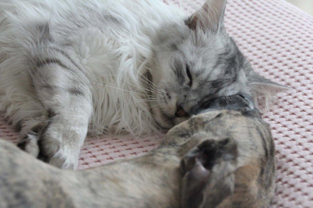 Kuscheln Katze mit Hund