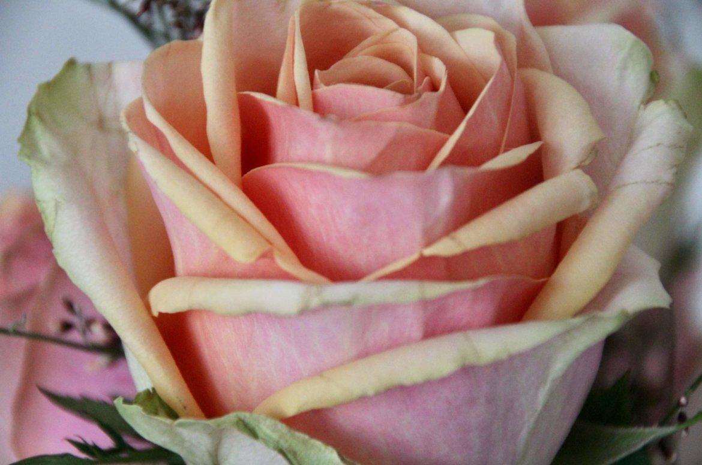 Blumen Meditation