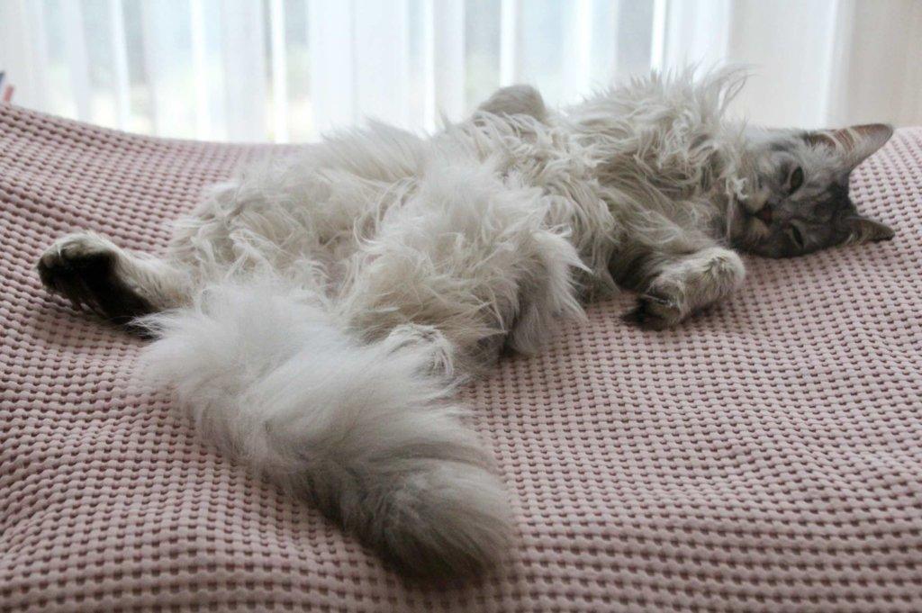 Kater beim Schlafen