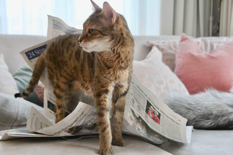 Katze Zeitung lesen