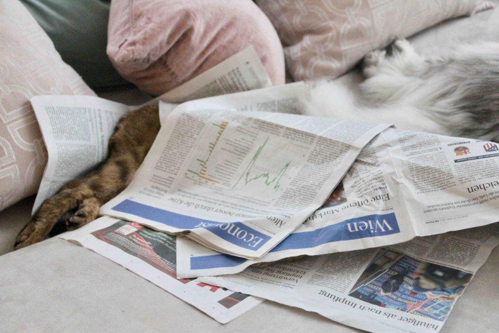 Katze im Zeitungspapier