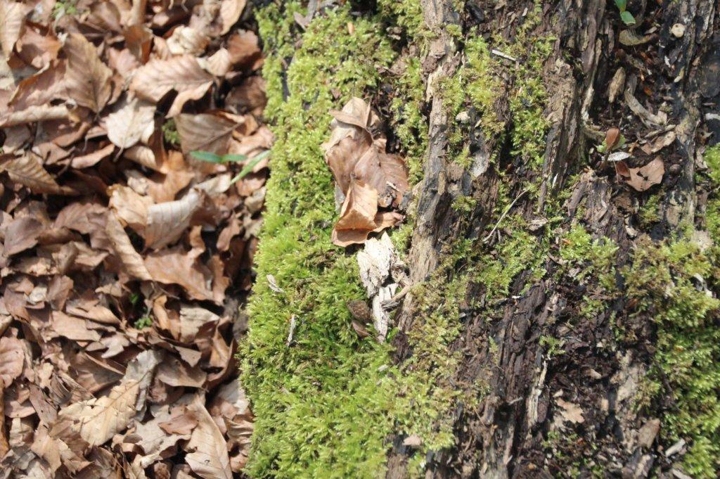 Wald Baumstamm Moos Achtsamkeit