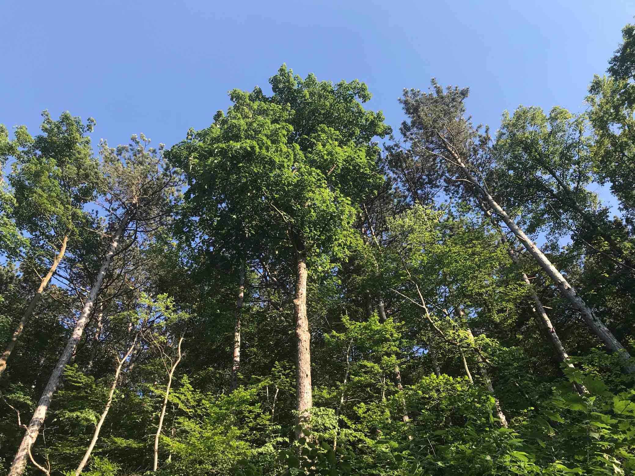 Wald blauer Himmel Natur