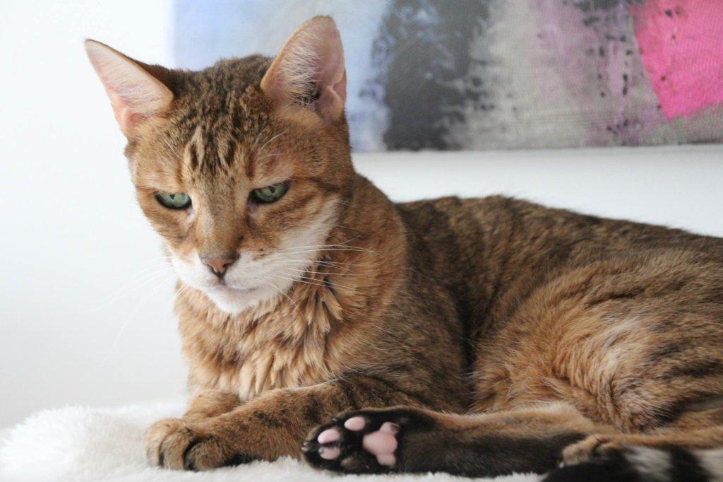 15jährige Katze