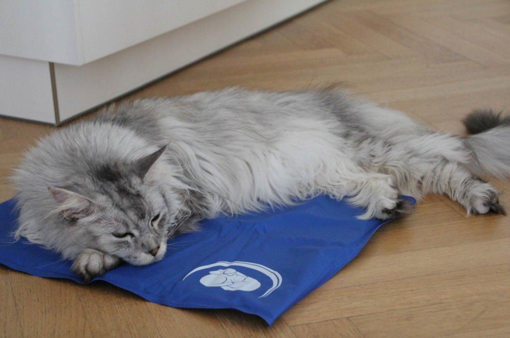 Kühlmatte Katze Sommer